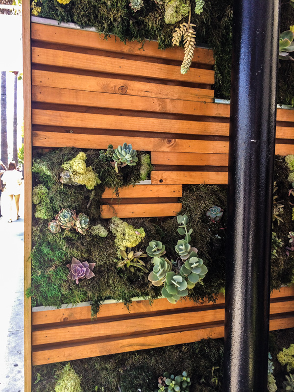 Kreation Cafe is a trendy organic restaurant cafe and juicery on Abbot Kinney; the succulents wall accents the front of the restaurant — great ideas for a succulent wall we're planning for our deck.