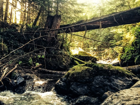 We went for a short hike looking for firewood and came across this river and fallen tree bridge.