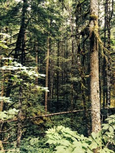 Weaver-Lake-Trees-IMG_4499