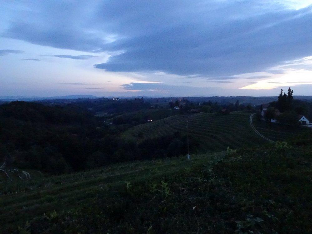 Slovenia Ptuj vineyard
