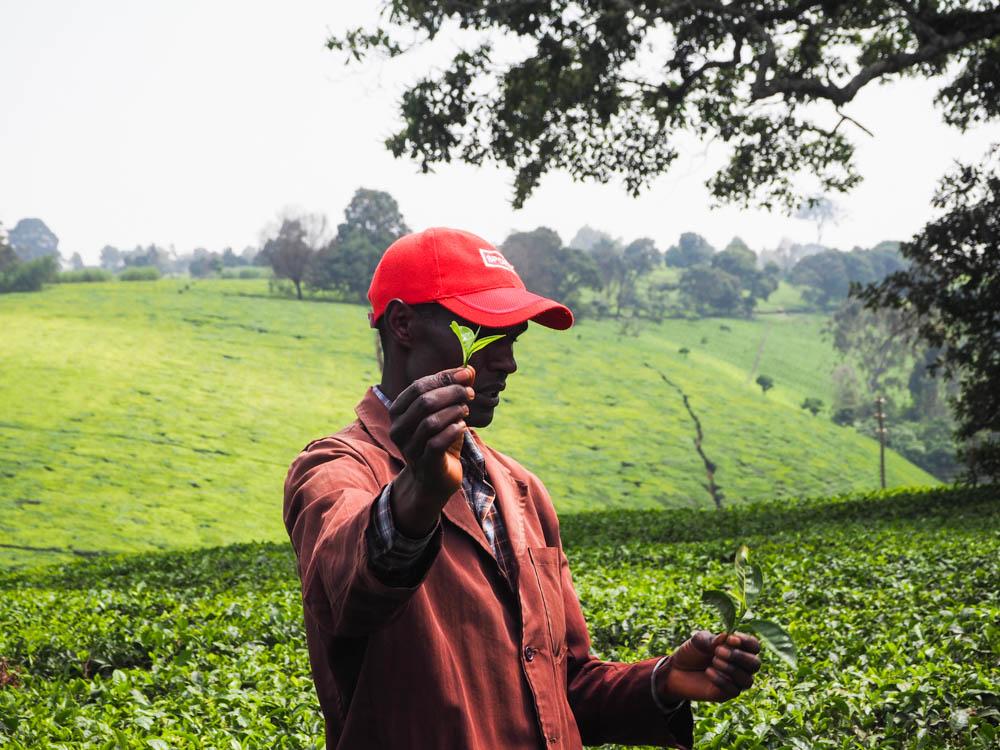 Kiambethu Tea farm Nairobi
