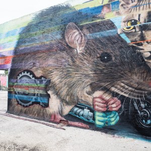 Concrete Canvas street art gent rat