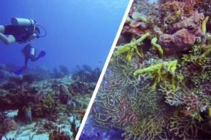 Don't dive in Cozumel