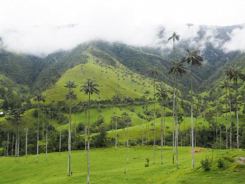 Valle de Cocora Kaffeezone Kolumbien
