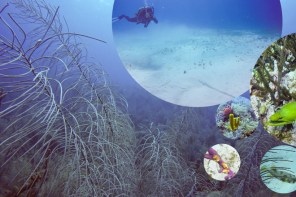 Diving in San Andrés with Blue Life