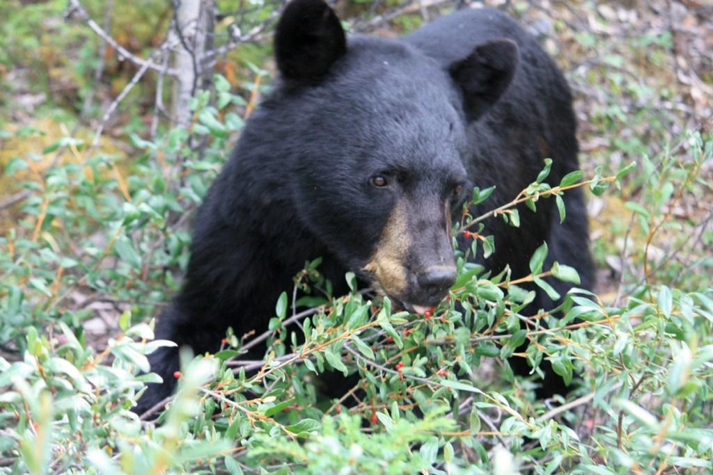 48 Stunden im Jasper Nationalpark
