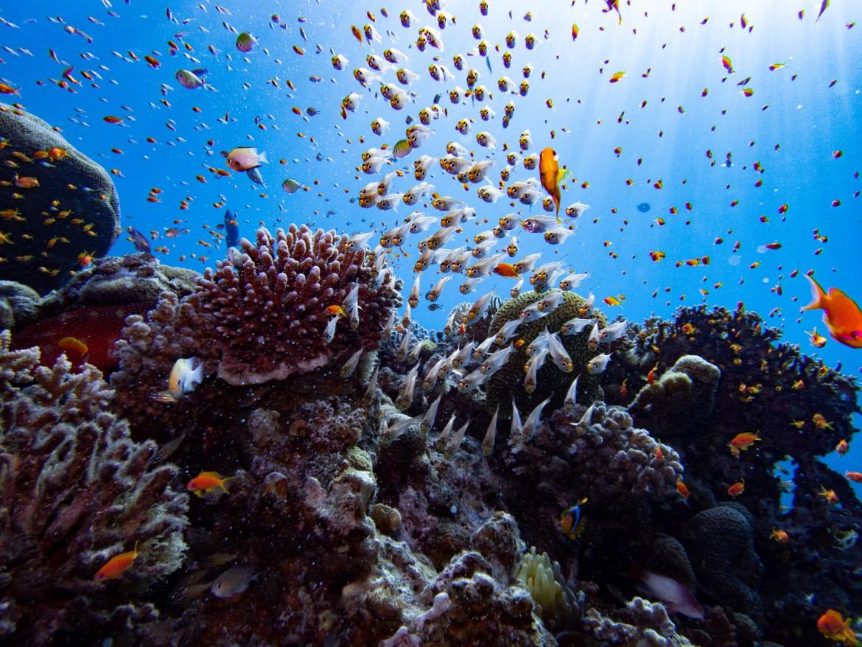 Fischschwarm Eilat Tauchen Israel Rotes Meer