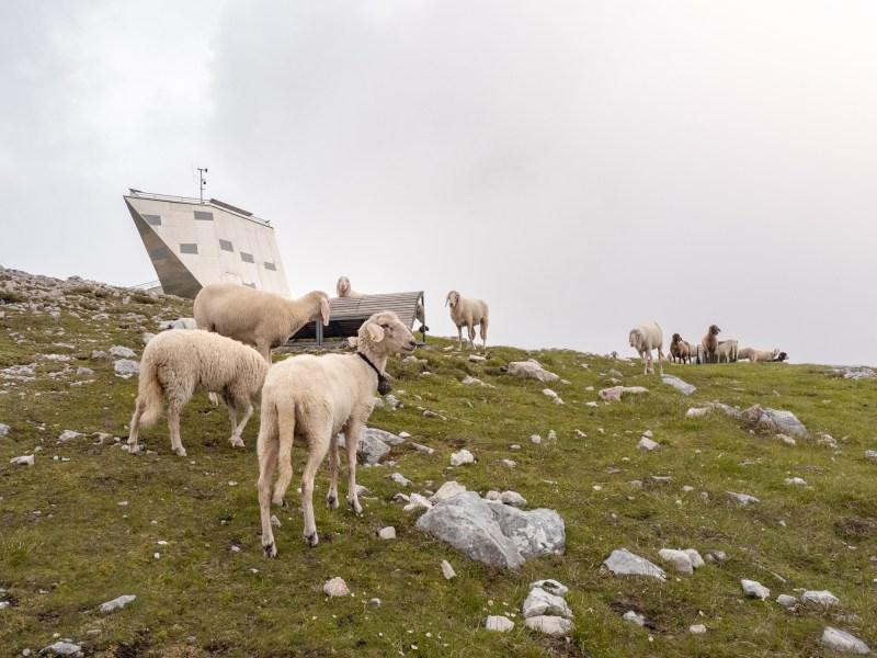 Krippenstein Welterbespirale Schafe Hallstatt