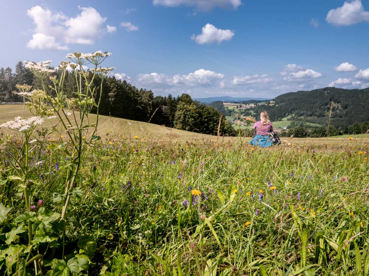 Nordwaldkamm Panoramaweg Weitblick