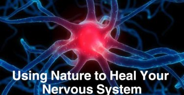 Using Nature to Heal Your Nervous System