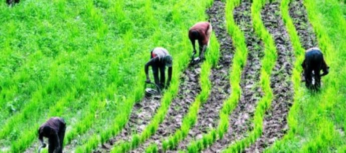 Jigawa farmers to get support from Govt