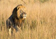 Xanda was reportedly shot on a trophy hunt