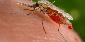 Over 13 million Nigerians battle malaria yearly