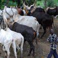 Abia farmers fear herdsmen in the State