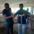Orile-Owu High School in Ayedaade LGA has been overtaken by snakes