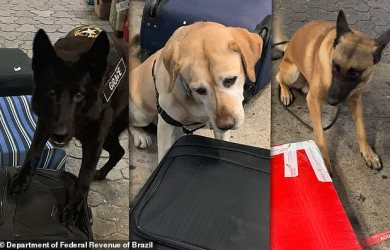 Drug sniffing dogs at an airport in Sao Paulo, Brazil, busted two women on Saturday and Sunday night trying to board international flights with cocaine hidden inside 16 pairs of sneakers and four framed paintings