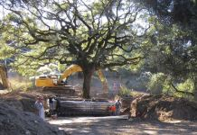 The 180-year-old heritage oak tree being excavated from an easement property in Sonoma, Califonia