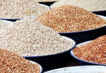 Nigeria could generate N48 billion yearly from new cowpea variety