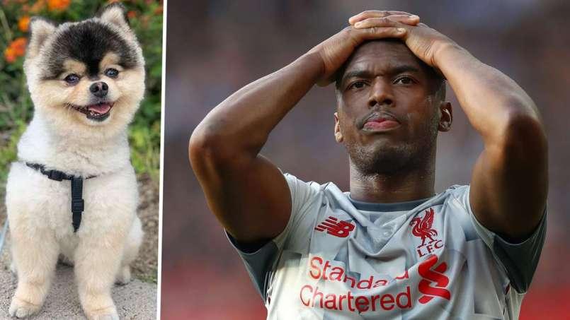 Daniel Sturridge wants his stolen dog back