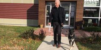 Joe Biden twisted his ankle while playing with Major, one of his two German shepherds