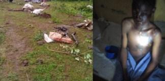 Lightning kills cows in Kwara