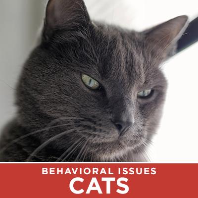 Cat Behavioral issues