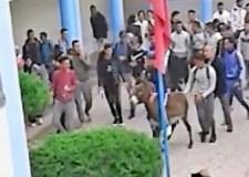 وزارة التربية توضح بشأن إدخال حمار إلى مدرسة ثانوية