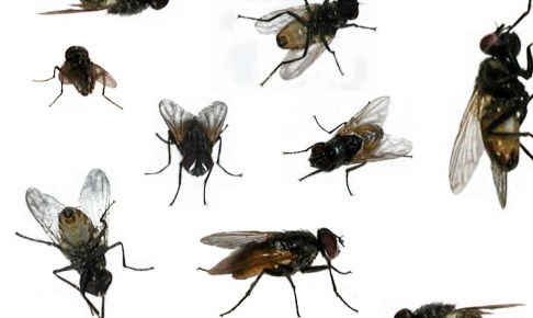 ساكنة بيوكرى و الدواوير المجاورة تشتكي  من انتشار الذباب والبعوض