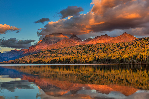 Sunset light on autumn tamarck trees over Bowman Lake in Glacier National Park, Montana