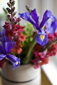 flores-sempre_1S.jpg