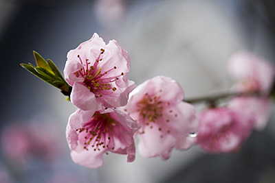 spring-rain_1S.jpg