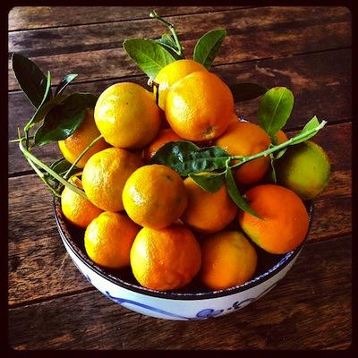 citrus-time2.jpg