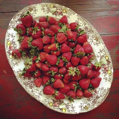 shake-rhubarb.jpg