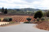 bella_vineyards_2.jpg