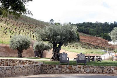 bella_vineyards_3.jpg