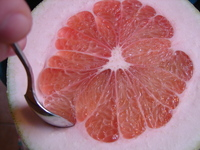giantgrapefruit2.JPG