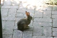 jack_tenant_rabbit_2s.jpg