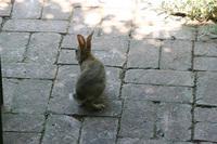 jack_tenant_rabbit_5s.jpg