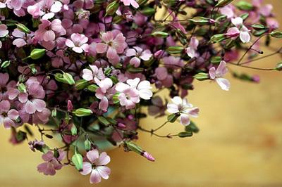 little_pink_6Sa.jpg
