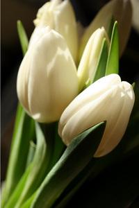 my_favorite_tulip.jpg