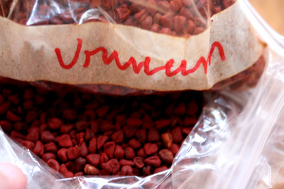 urucum_1s.jpg