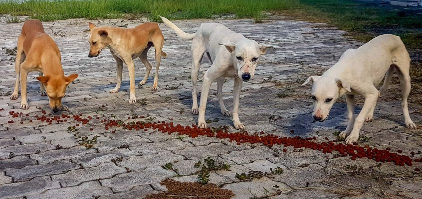 Safe the Dogs – Sailors Taskforce While Corona-Virus in Marina Kochi