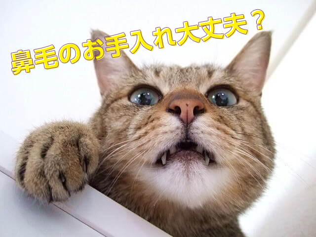 鼻毛のお手入れ大丈夫?と聞いてくる猫