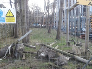 'The green playground ... with a high wire fence all around'
