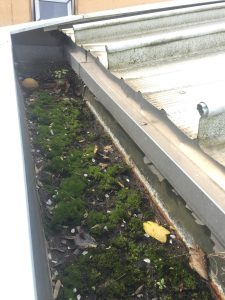 And finally the roof gutters themselves (the before shot containing lots of moss and a sporting item).