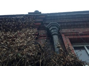 Evocative images of the ivy growing over the west gable of the old Church High Main Building, November 2015.
