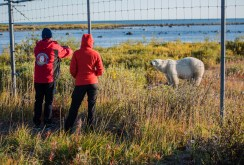 polar-bear-and-guests-outside-fence-nanuk-polar-bear-lodge-ian-johnson