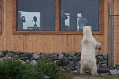 polar-bear-at-window-seal-river-heritage-lodge