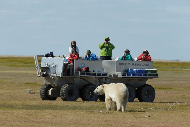 Big polar bear approaches Tundra Rhino at Nanuk. Charles Glatzer photo.