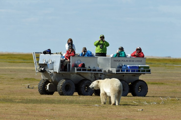 Polar bear comes in for a closer look at Nanuk. Charles Glatzer photo.